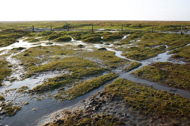 Die Salzwiesen sind von den Landunter vor Weihnachten und dem vielen Regen nass und aufgeweicht. Zwischen den Tagen jedoch bleibt es weitgehend trocken und das Wetter lädt zu Spaziergängen ein.