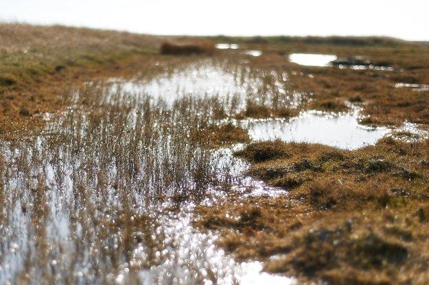 Feuchtwiesen